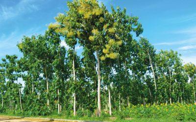 Bäume für Tansania