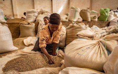 Aufbau der Mount Elgon Kaffee Kooperative in Uganda