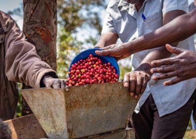 Kaffee Kooperative Uganda